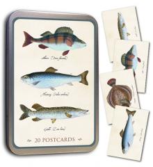 Sköna Ting Postkarten 20 Stück mit Hecht, Barsch, Steinbutt, Meerforelle in schmucker Blechdose